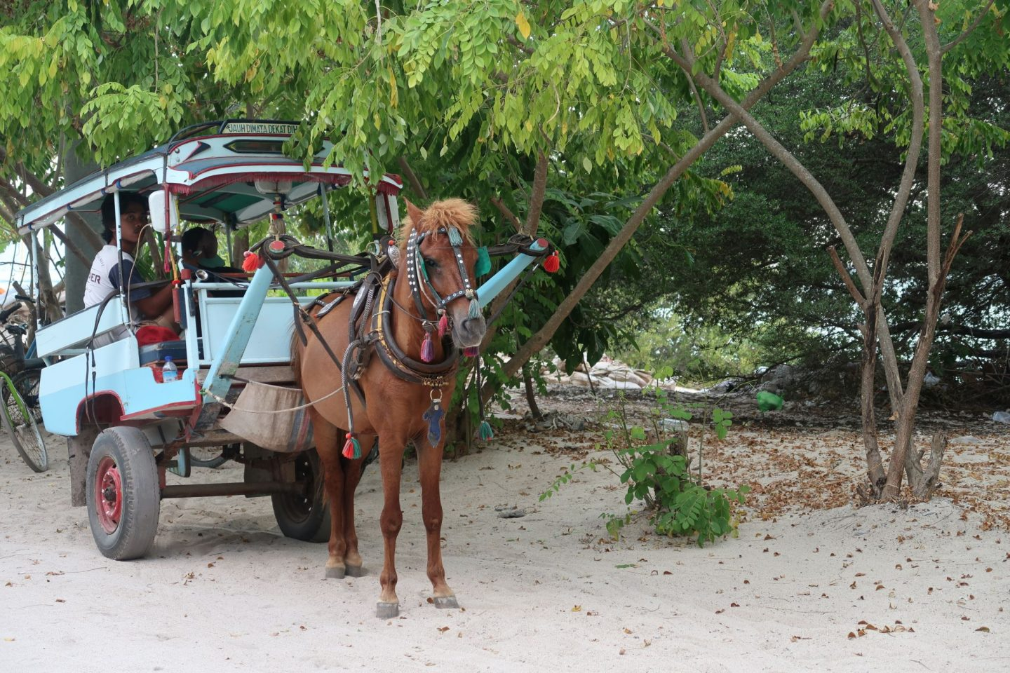 Horse and Cart on Gili Meno Travel Photos WhatLauraLoves