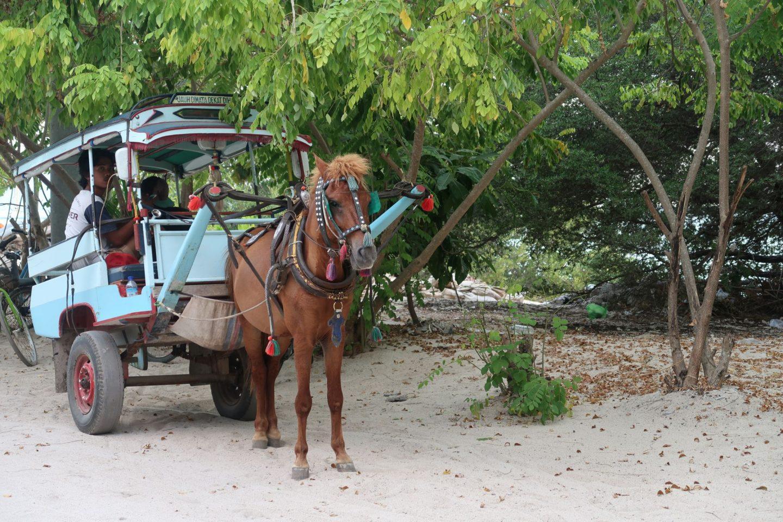 Horse and Cart on Gili Meno Travel Photos WhatLauraLoves