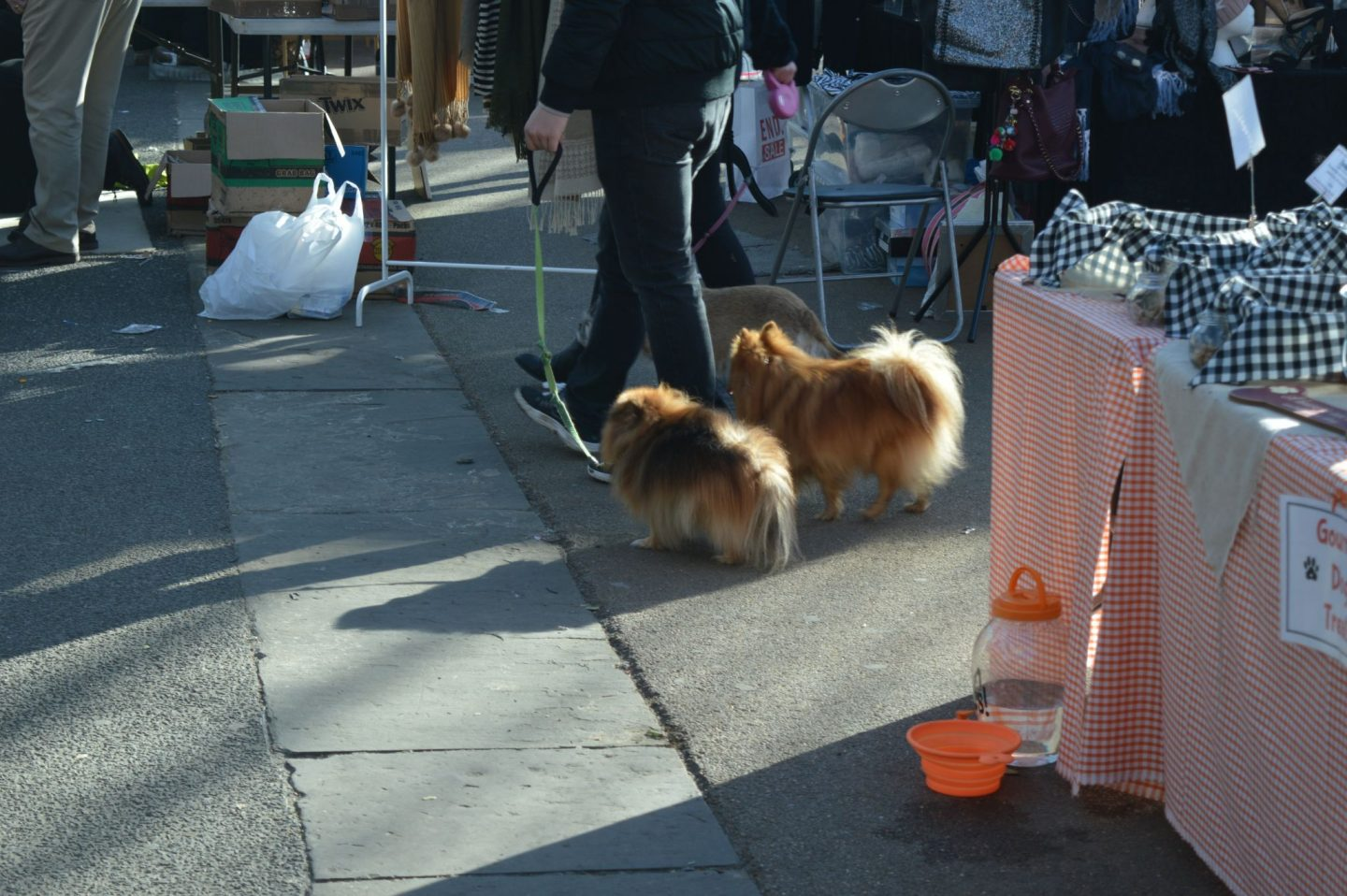 Dogs at Tynemouth Market