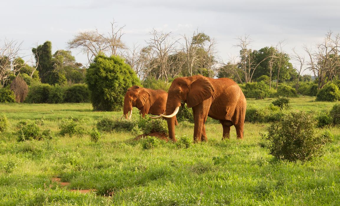 Elephants in Kenya WhatLauraLoves