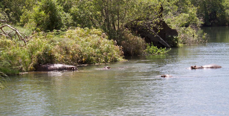 Hippos in Kenya WhatLauraLoves