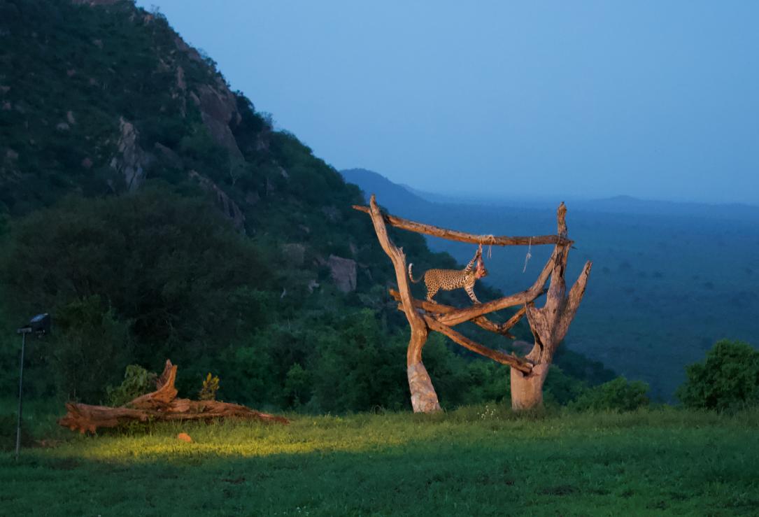 Leopard in Kenya WhatLauraLoves